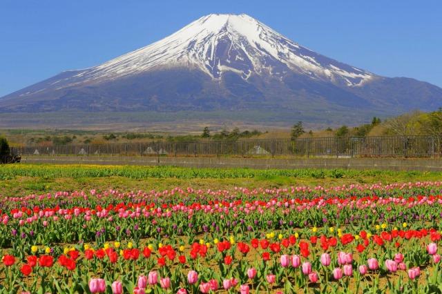 山中湖 花の都公園