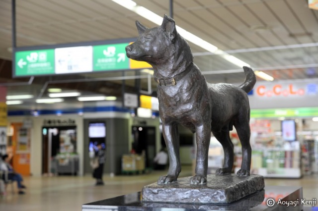 新潟駅忠犬タマ公像前